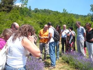 Bibiana. A giugno parte un corso per la coltivazione delle erbe officinali