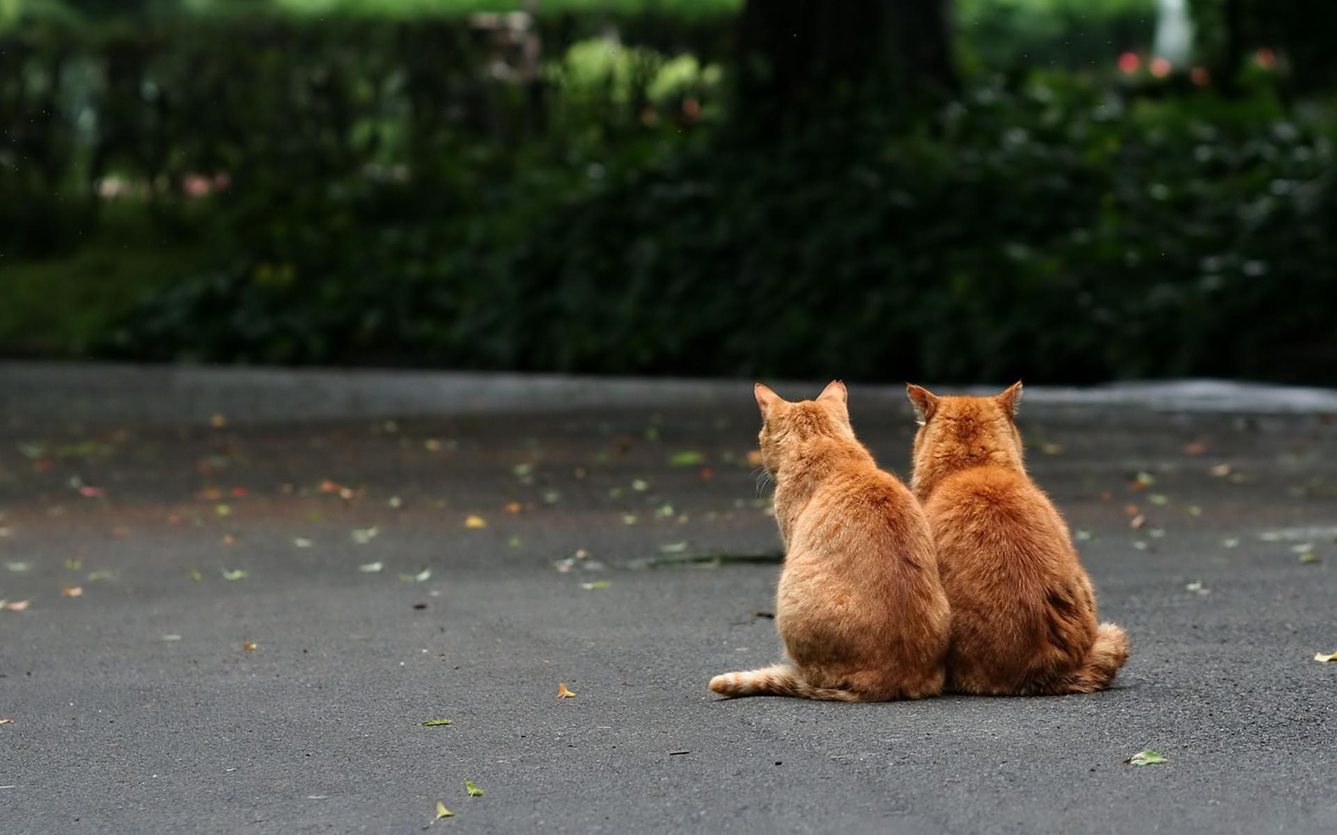 Quattro gatti nei musei di Pinerolo?