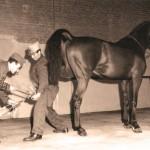 Blasio nel 1960 durante una esercitazione di ferratura a Pinerolo presso la Scuola Veterinaria Militare