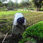 Sophie al lavoro negli orti già avviati grazie a Slow Food