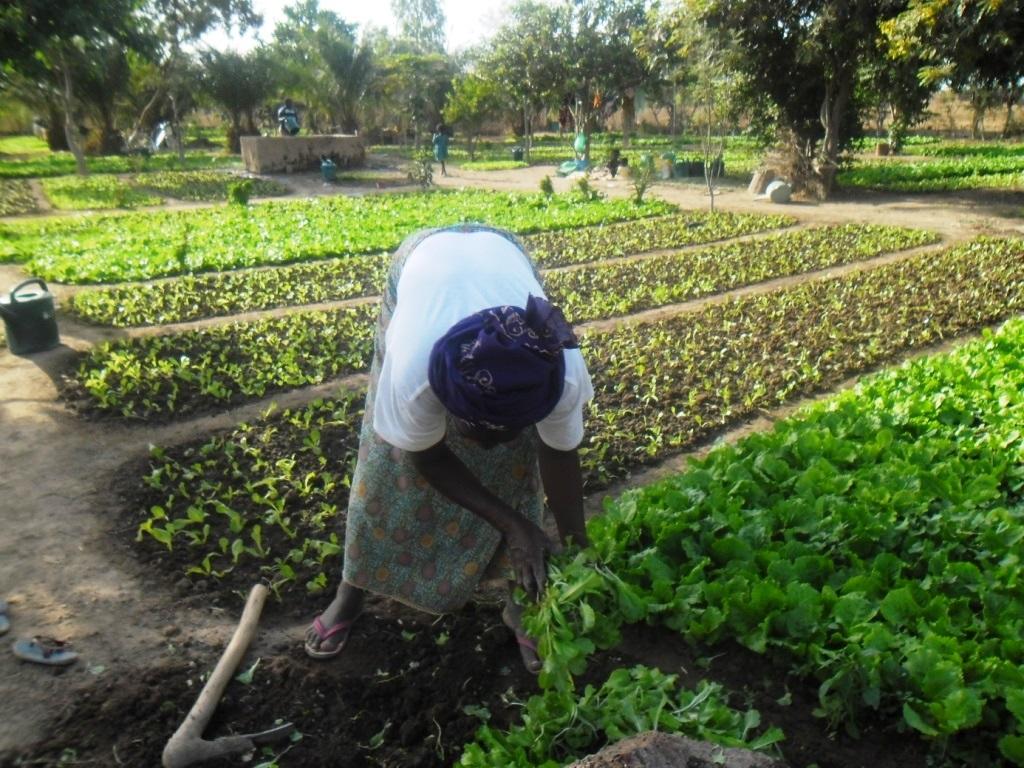 L'orto comunitario per produrre cibo e dignità. Da Bra al villaggio africano di Boulbi ( Burkina Faso)