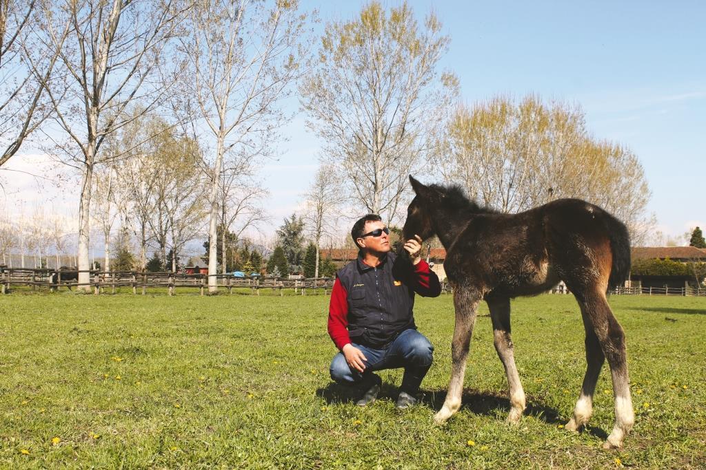 Cavalli: una passione che sfida la crisi