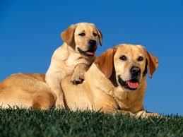 Salute. Presentato il video tutorial dedicato per una migliore relazione uomo/cane