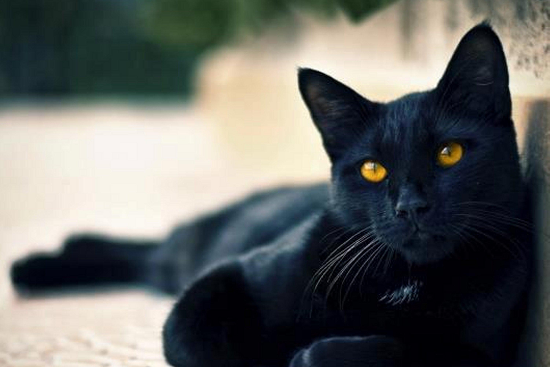 Halloween e i gatti neri