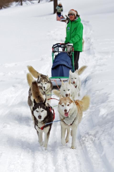 Sulla slitta con gli husky: le montagne olimpiche come la grande Siberia