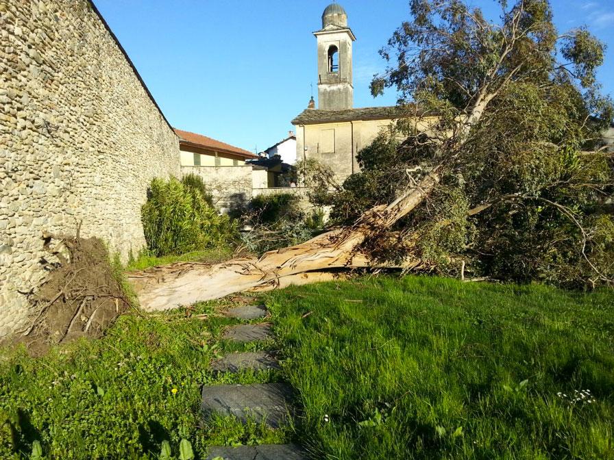 Luserna. Il vento sradica un albero nel giardino del seminario