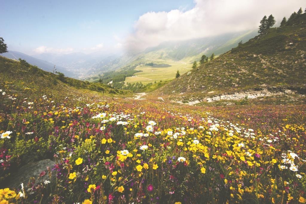 I pascoli alpini che sovrastano Pian dell'Alpe (Val Chisone)