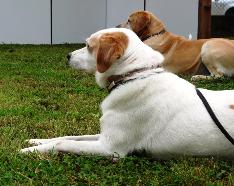 Uomini e cani: a Giaveno un corso per conseguire il patentino