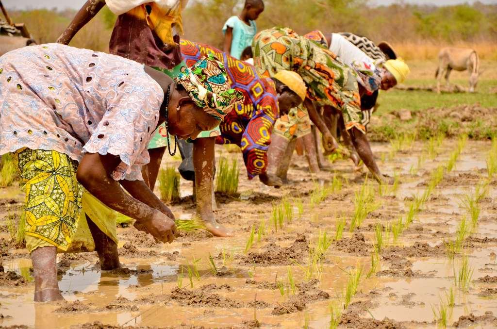 Grugliasco. Il 26 novembre un incontro sui Sistemi Agricoli Familiari in Africa