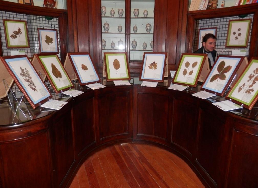 """""""Funghi vs piante"""", nel museo di scienze naturali di Pinerolo"""