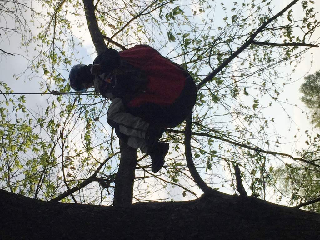 Francese col parapendio resta incastrato tra i rami di un albero