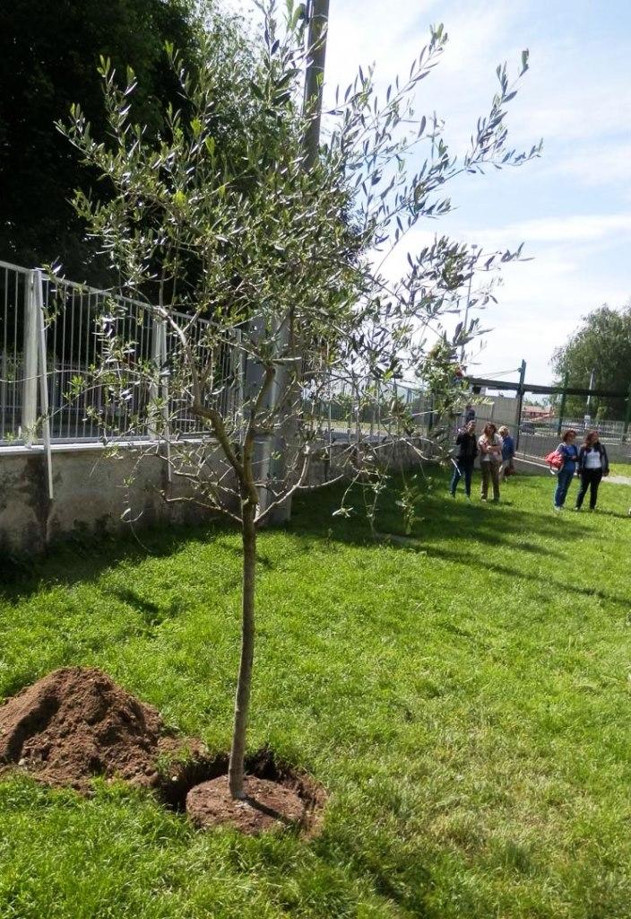 [Photogallery] Abbadia. Un albero a scuola in memoria di Giovanni Falcone