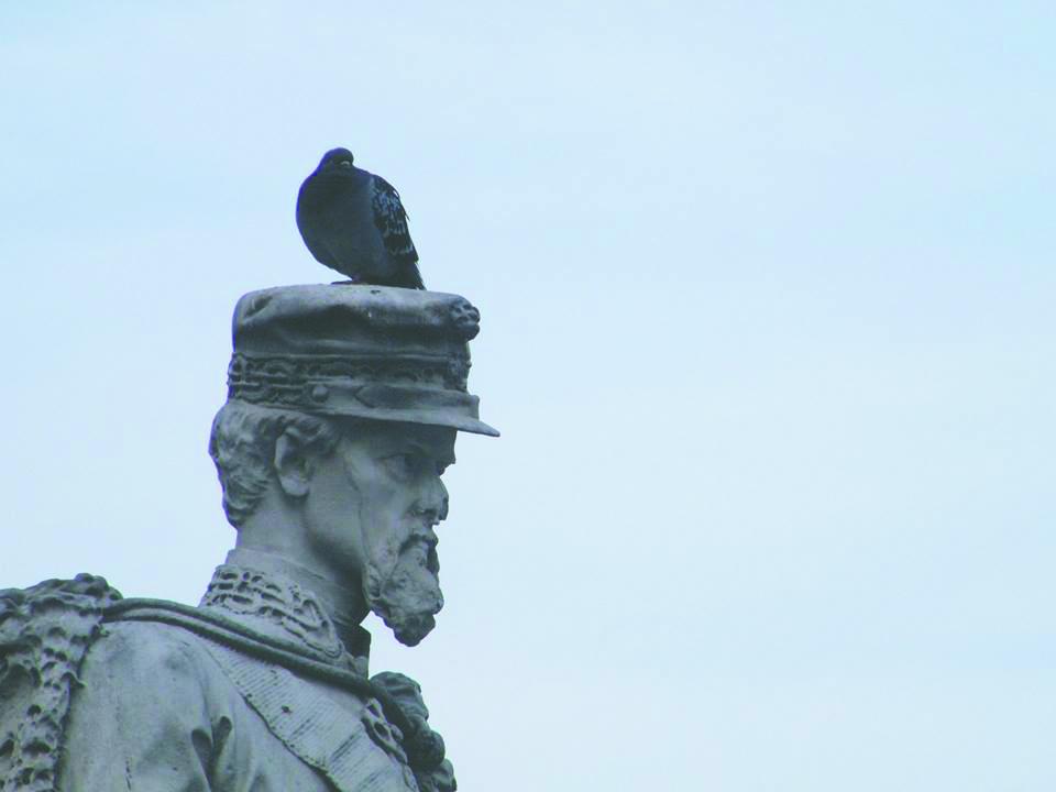 Pinerolo tra bilancio e guerra ai piccioni