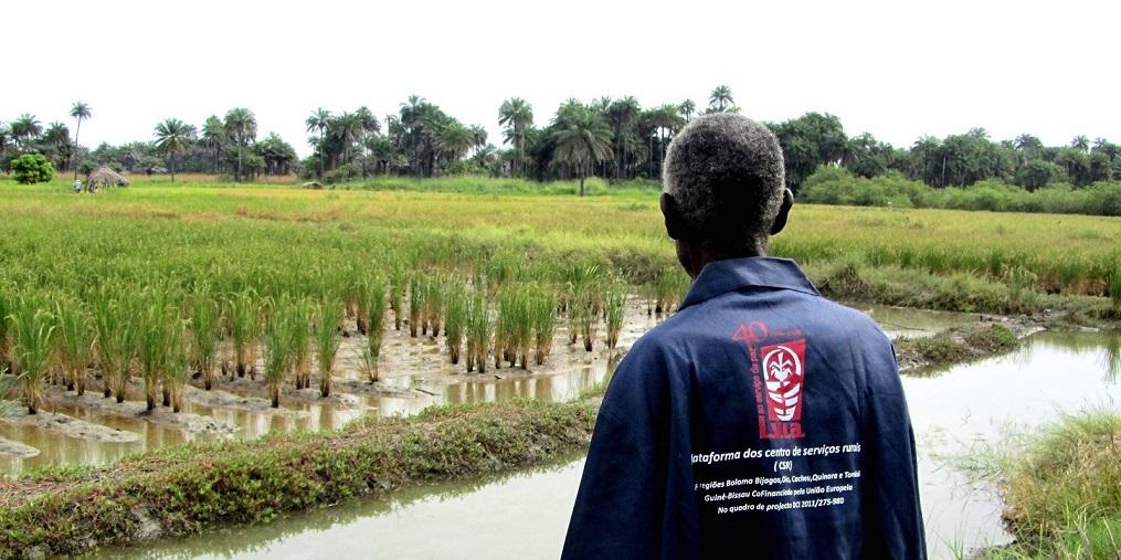 """""""Quel che nostro ha valore"""", il racconto fotografico sull'agricoltura della Guinea Bissau"""