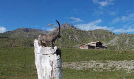Trasferta valdostana per il gruppo escursionismo TAM