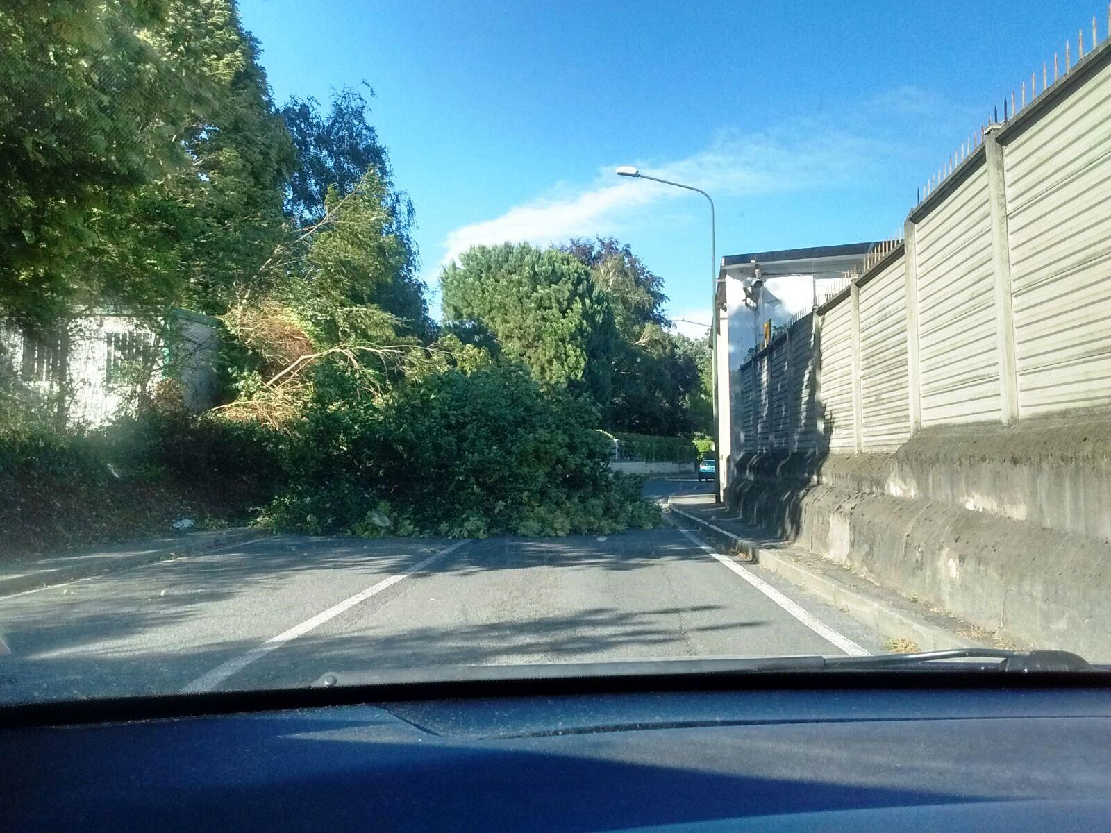 albero abbattuto