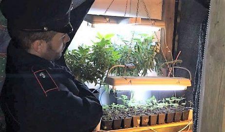 Marijuana. Aumentati i sequestri in Piemonte