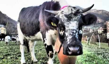 Fenestrelle. Il 5 ottobre a Chambons protagonisti animali e trattori
