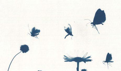 """Pinerolo. Sabato 26 inaugurazione della mostra """"Aspettando il sole e l'aria e l'ombra"""""""