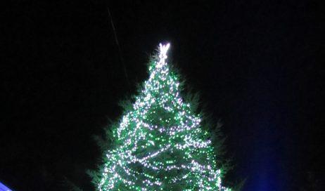 Alberi e piante di Natale: non c'è solo l'abete
