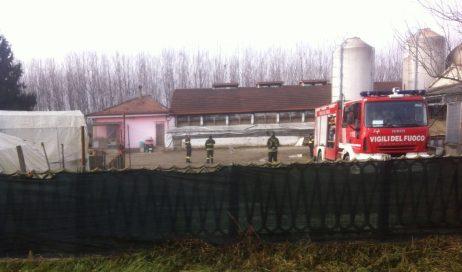Villafranca. Crolla il soffitto di un allevamento dove erano ricoverati 440 suini