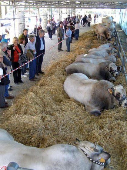 A Cavour la 18/esima edizione di Carne di razza Piemontese (Foto ufficio stampa Comune di Cavour)