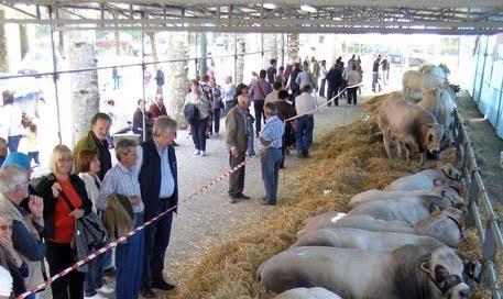 """Nel week-end torna """"Cavour, Carne di razza Piemontese"""", la rassegna cavourese dedicata alla filiera dell'Oro rosso"""
