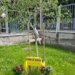 Anniversario Falcone - Foto Gandolfo (14)