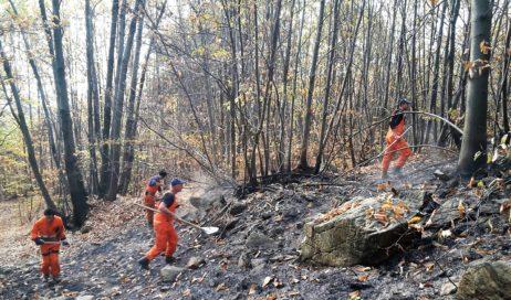 Coldiretti: servono 15 anni per ricostruire i boschi bruciati dagli incendi