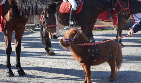 [ photogallery ] Ad Abbadia la benedizione degli animali in occasione della festa di Sant'Antonio