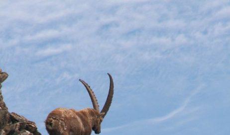 ASLTO 3 – aree protette Alpi Cozie: nuova convenzione per la gestione degli animali