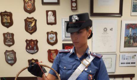 Torino. Droga calata con paniere: quattro arresti