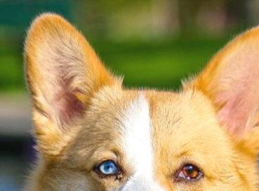 #coronavirus. Parte il servizio di accompagnamento dei cani di chi è in quarantena