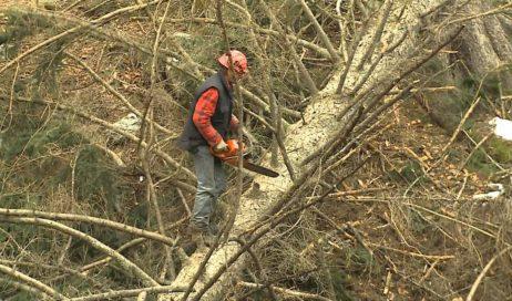 #coronavirus. Uncem: boscaioli e imprese forestali siano autorizzati a lavorare
