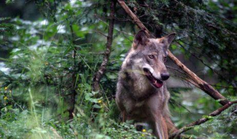 Quarant'anni di Parchi naturali: al di là dei vincoli un'opportunità