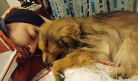 SOS per Tommy, cagnolino affetto da una neoplasia ipofisaria