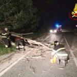 Roure. Albero cade sulla Provinciale: intervento dei Vigili del Fuoco